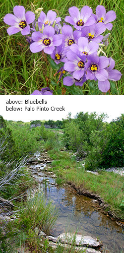 Bluebell wildflowers and Palo Pinto Creek at Palo Pinto Mountains State Park